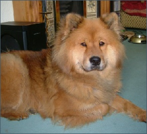 Eurasier female